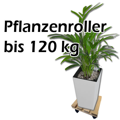pflanzenroller 120kg blumenroller pflanzenuntersetzer rollbrett eckig buche ebay. Black Bedroom Furniture Sets. Home Design Ideas